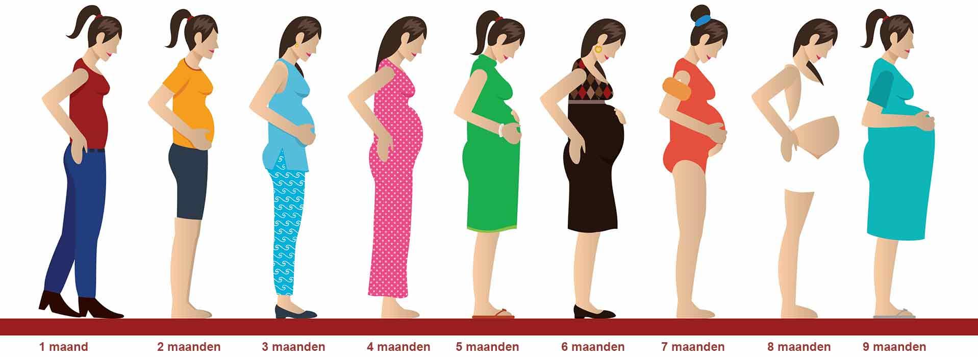 Hoeveel weken zwanger